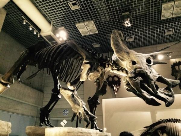 恐竜 化石 切手展 函南