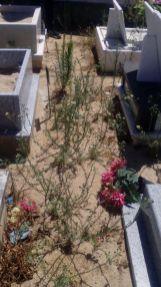 cemitério 7_9149903167574069303_o