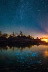Tofino Bioluminescence