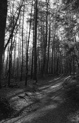 Iniquitous Path