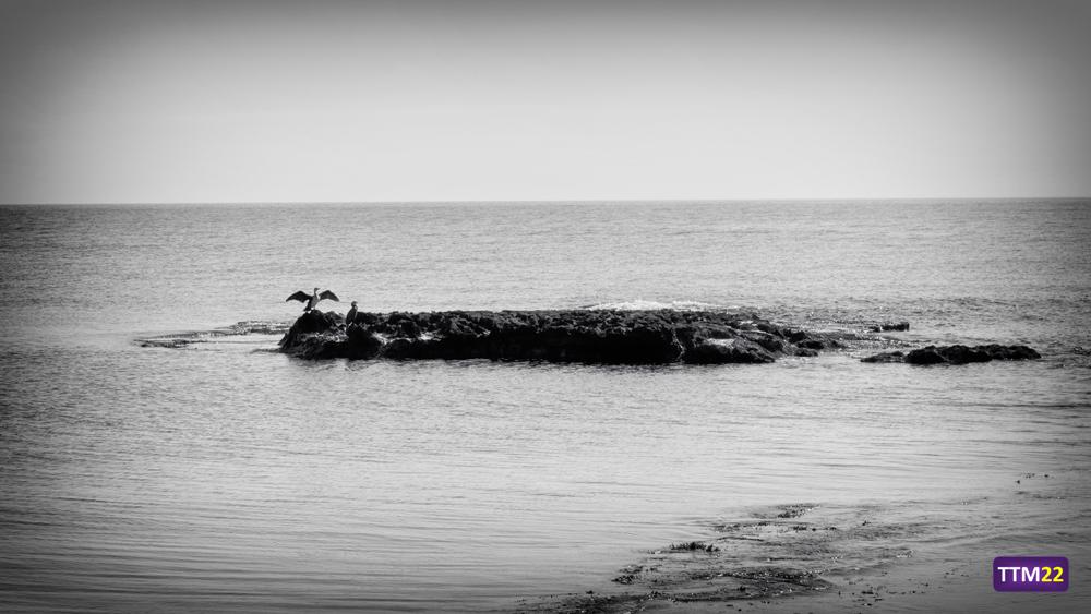 cormoranes-cabo-huerta-alicante