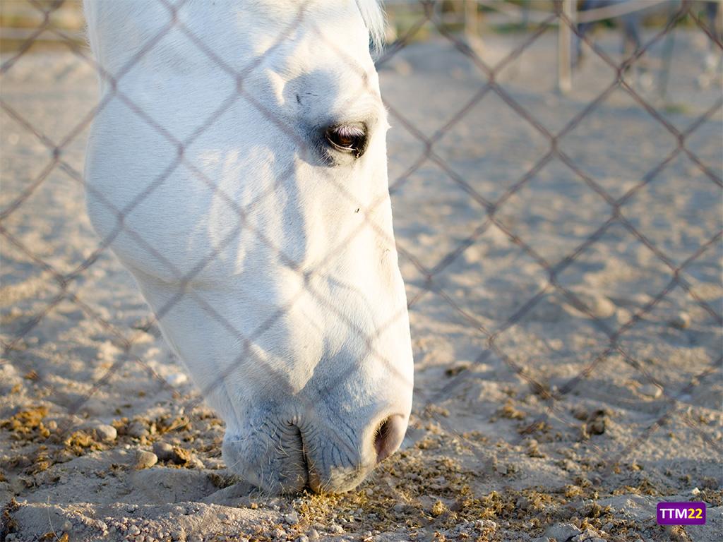 caballo-equus