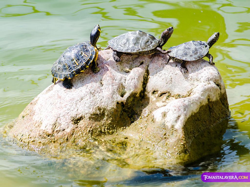 tortugas-bosque-ilustrado-ua