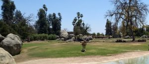 Taxes helping the Fresno Zoo