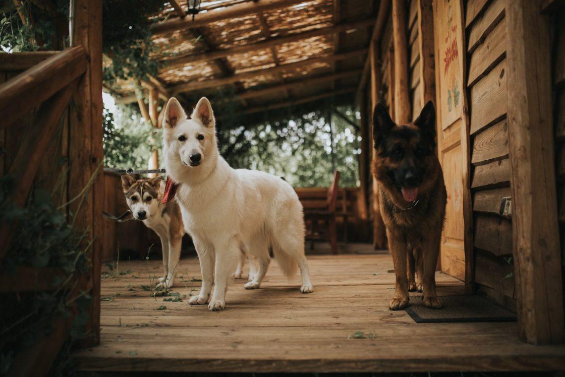 psy ranczo w dolinie rustykalny ślub plenerowy