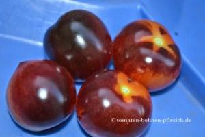 Bosque Blue Tomate