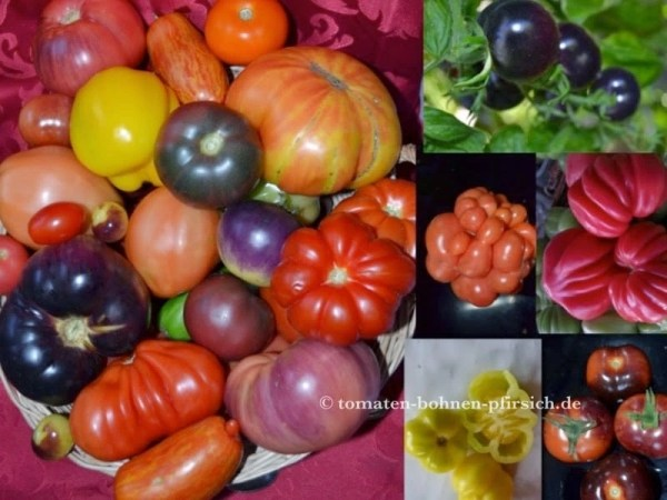 Tomatenmischung-Mix-100