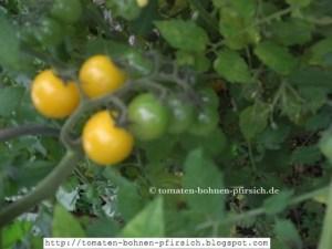 kleine, runde gelbe Cocktail-Tomate