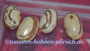 Italien Snape Bohnen