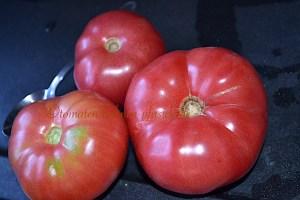 Riesentomaten, blue, Big, Ambrosia, dicke blau rosa Salat Tomate