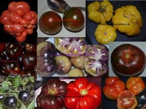 20 Samen Tomatenmischung von 10 verschiedene Sorten