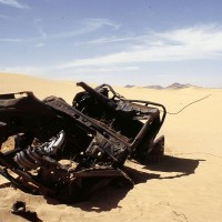 800px-Carcass_Sahara_Algeria