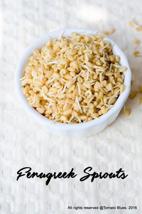 fenugreek sprouts