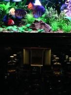 Lobster-cave-beaumaris15