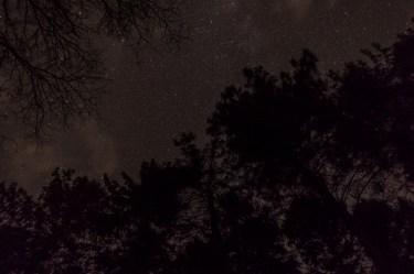 haind-woods-stars-redo-2