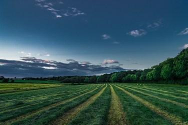 hay-walk-2