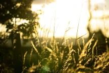 sun-walk-1
