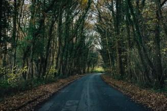 161118-haugh-woods-6