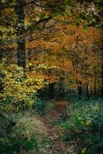 161118-haugh-woods-7