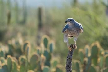 Arizona; sonora desert