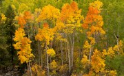 Ouray, CO. fall color.