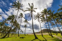 Anakena Beach the most famous beach at Easter Island and maybe the best one in Chile. With it palm trees coming from Polynesia islands and the Ahu Nau Nau Moais is an impressive be