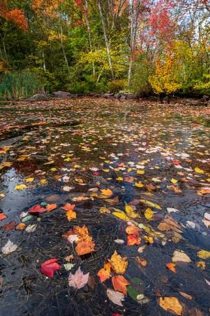 Bar Harbor, Maine. fall colors.