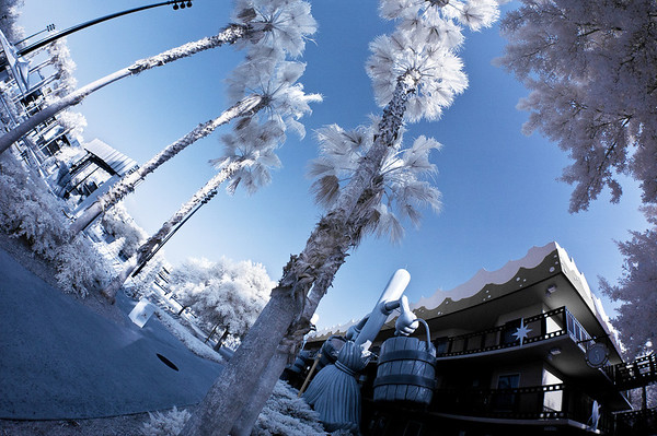 Walt Disney World ResortAll Star MoviesThe palm trees at All Star Movies look like they've been hit by a winter storm in this infrared photo!