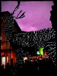 Covent Garden Reindeer.