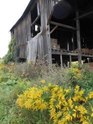 barn-going-on
