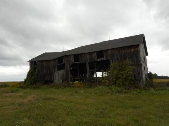 farm-auction-fields-filled-with-goldenrods-and-asters