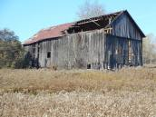 barn-surrounded-by-faded-goldenrod