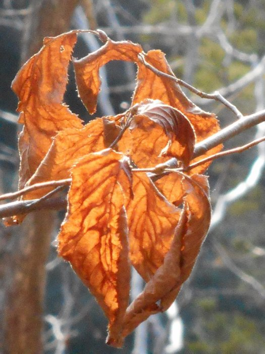 the-sound-of-leaves-upon-leaves