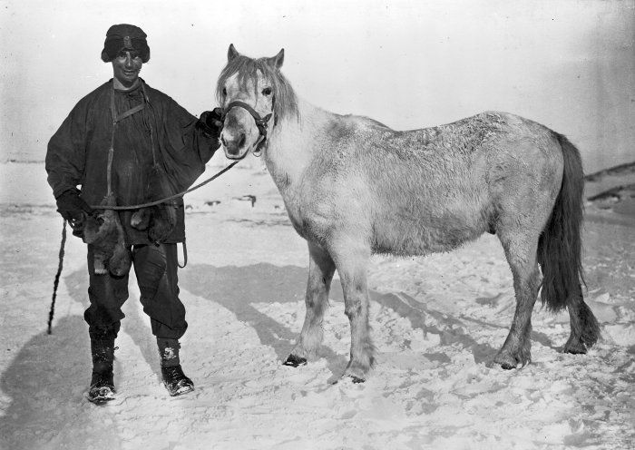 Apsley Cherry Garrard (1886-1959) with the pony Michael before the departure for the south polar journey during the Terra-Nova-Expedition