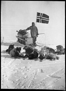 Amundsen's dogs at the South Pole.