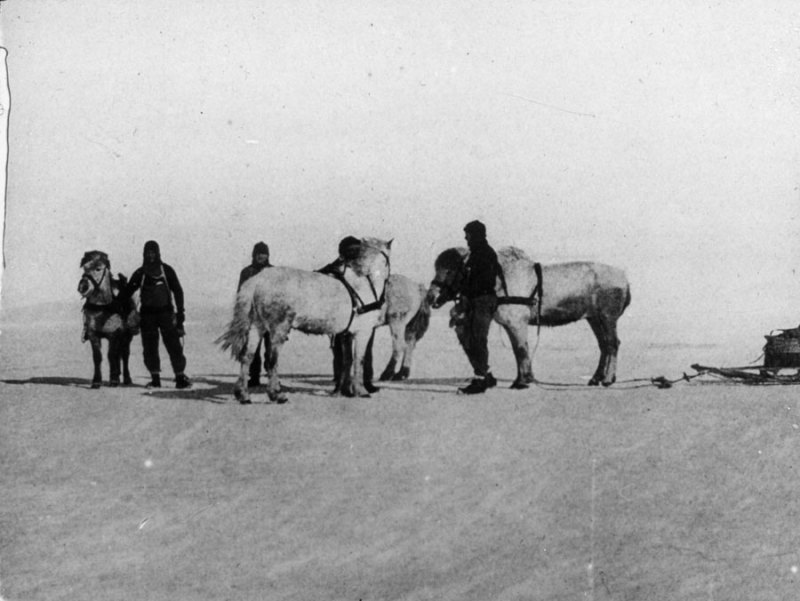 Men and ponies on Ernest Shackleton's Nimrod Expedition.