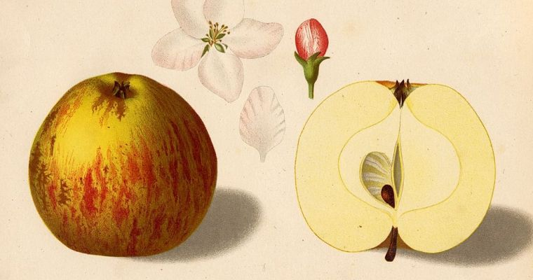 Apples, Academia, and Lessons for Big Business: Part 1