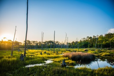 First Landign State Park, Virginia Beach. The sun's early rays illuminate the marsh surrounding White Hill Lake.