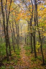 Misty trail in Dolly Sods Wilderness