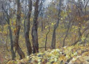 Autumn forest 1