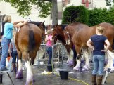 Heavy horse beauty salon.