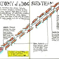 Iditarod Infographics from the Field.