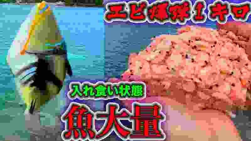 【大漁】巨大エビブロック1キロ沖縄の海に捲いて釣りしたら変な魚入れ食いで釣れすぎ状態にwww