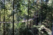 Elevated path at the Treetop Adventure, Capilano, Vancouver