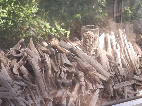 Femur Bones From the Mass Graves in the Killing Field