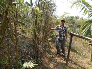 Living Erosion Hedge Barrier