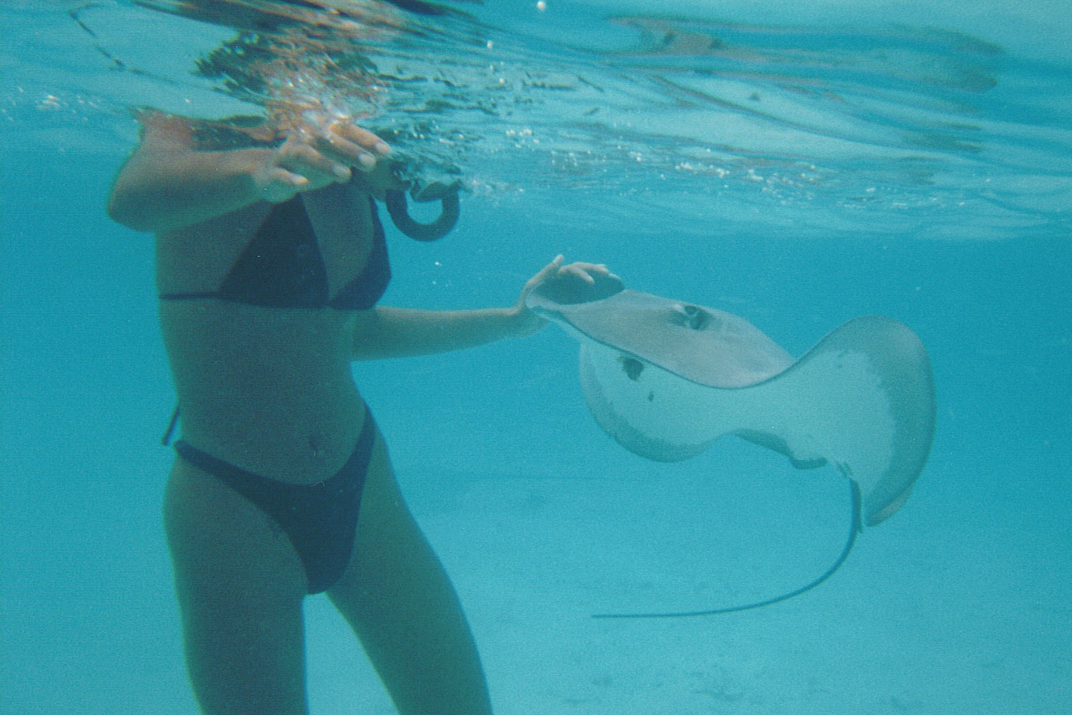 stingrays also joined us