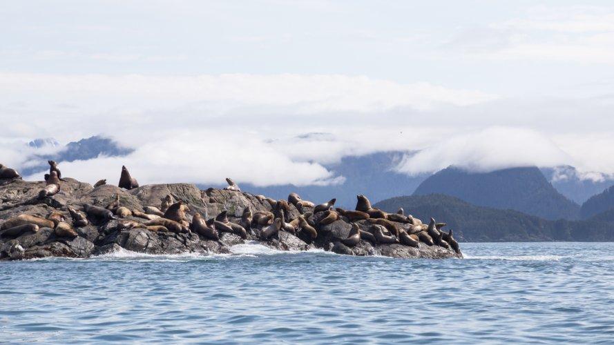 Tom Scherlis Alaska-0482
