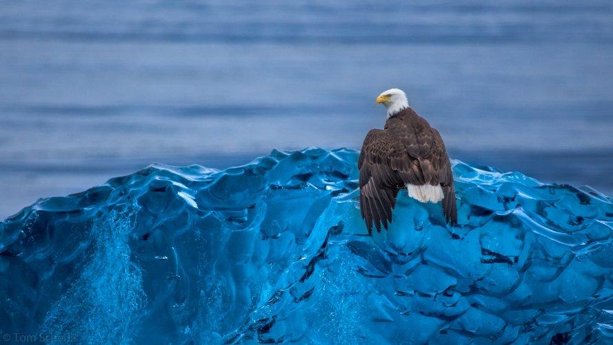 Tom Scherlis Alaska-2843