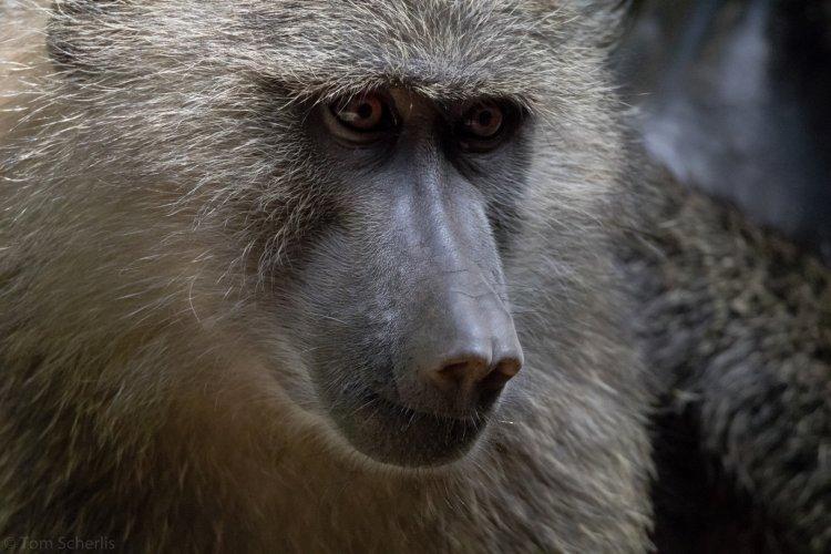 Tom Scherlis Tanzania-0347